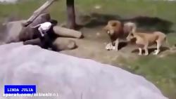 100تا از بهترین حمله های حیوانات به انسان