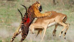 شکار لحظه ها و مستند حیات وحش