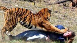 باورنکردنی ترین برخوردها با حیوانات وحشی در جاده