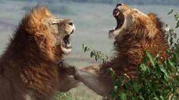 جنگ و نبرد وحشتناک حیوانات با یکدیگر