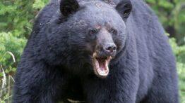 حیات وحش، صحنه های جنگ وحشتناک بین حیوانات وحشی