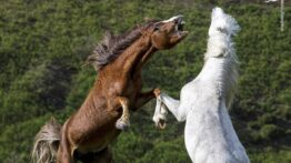 نبرد حیوانات وحشی زیبا و دیدنی