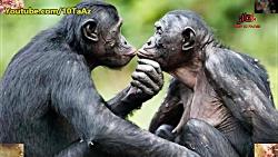 ۱۵ عادت عجیب و غریب جفت گیری در حیوانات