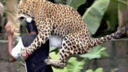 حمله حیوانات به مردم و پاره کردن انها